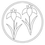 菖蒲(アヤメ)の花のぬりえイラスト02
