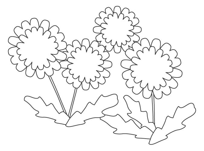 たんぽぽの花のぬりえイラスト