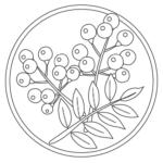 木の実のぬりえイラスト