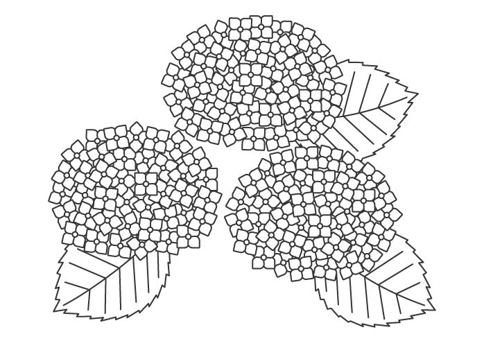 紫陽花(あじさい)のぬりえ03イラスト