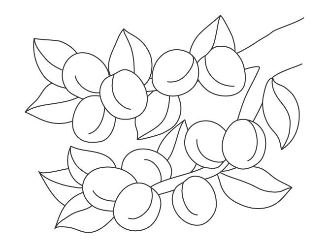 木に実っている梅のぬりえイラスト